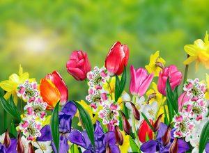 Chateau de la Ruche Spring Flowers