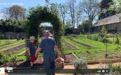 The Strawbridge Family Picnic